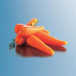 BABY CARROTS 2KG