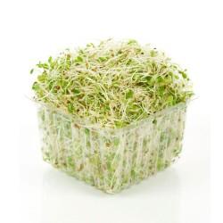Alfalfa (Punnet) 120gm