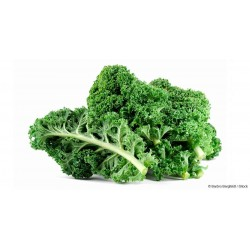 KALE BUNCH GREEN