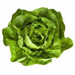 Lettuce - Butter (ea)