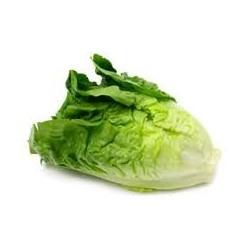 Lettuce - Cos (ea)
