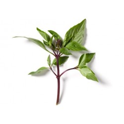 BASIL THAI, BUNCH