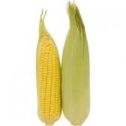 Corn (ea)
