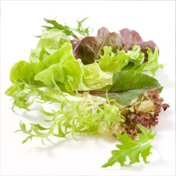 Salad Mix, 100g punnet