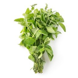 Oregano, bunch