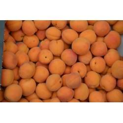 Apricot, kg